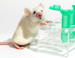 mouse-test-tubes-scientist-800x430